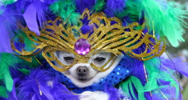 THE LIVING DESERT TO BECOME THE BIG EASY FOR MARDI PAWS