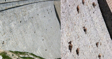 Coachella Valley Meet The Alpine ibex